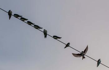 Wings on a Wire -Rusty Lofgren